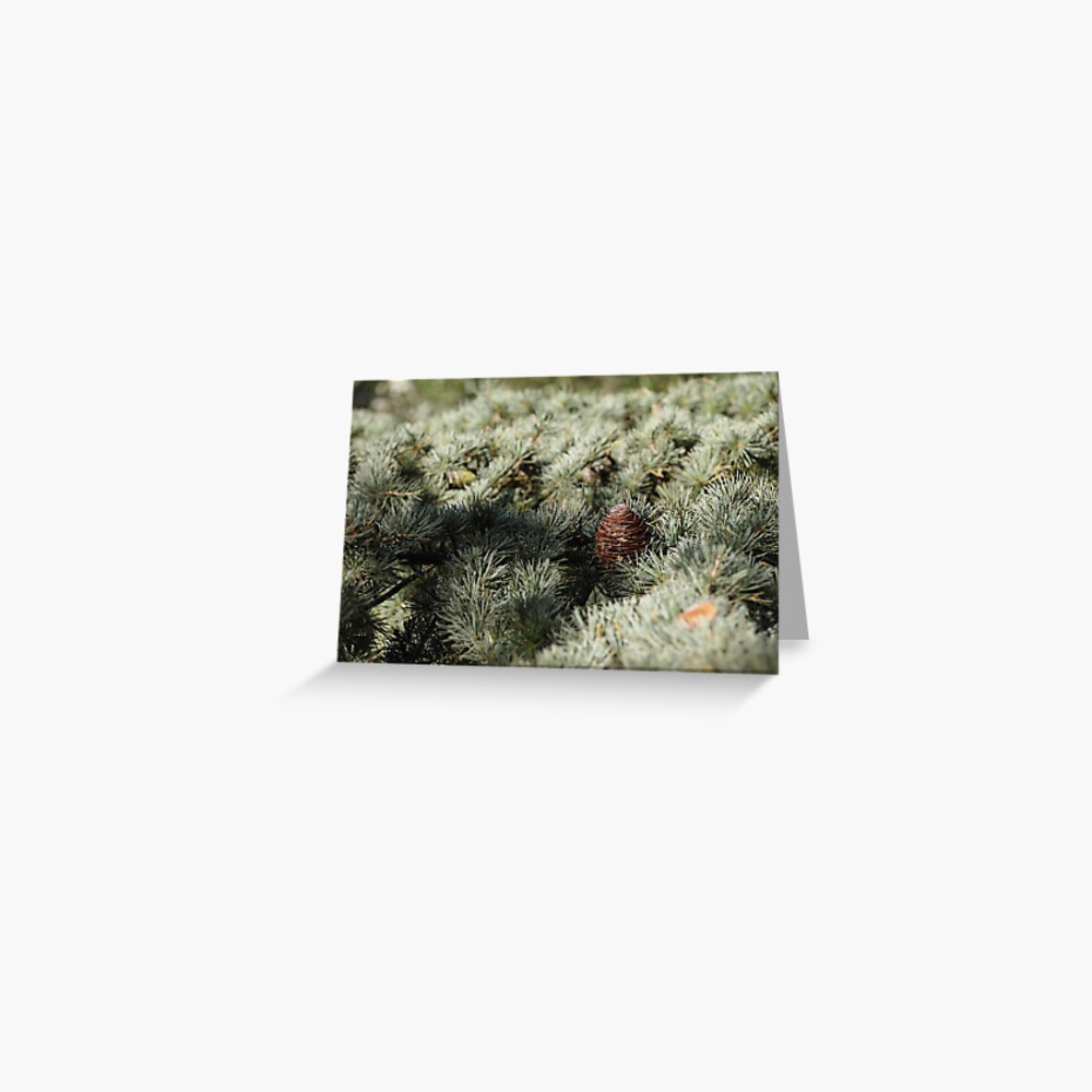 In the woods - Fir Tree Greeting Card