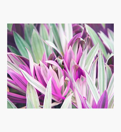 Colorful Tropical Foliage - nature photography Photographic Print
