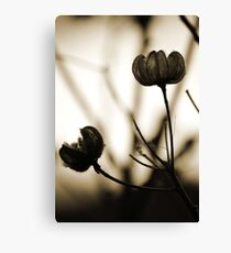 Seed Pods 1 Canvas Print