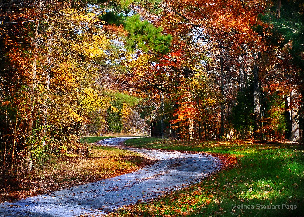 """""""A Road Less Traveled"""" by Melinda Stewart Page"""
