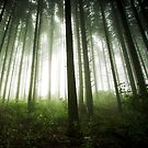 Green Forest by Patrice Mestari