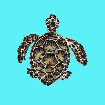 Turtle by cmcewan