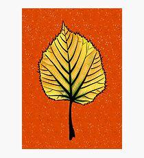 Yellow Linden Leaf On Orange | Decorative Botanical Art Photographic Print