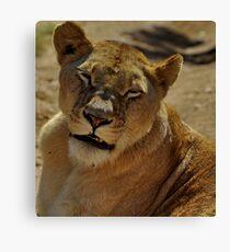 Sleepy lioness Leinwanddruck