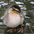 Fluffy Duckling (Lake District) by CreativeEm