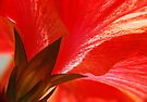 Petal Passion by Elaine  Manley