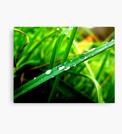 diamonds in the grass Canvas Print