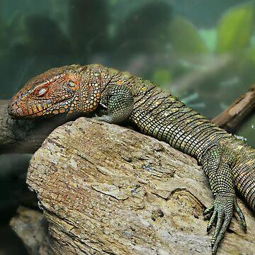 Caiman Lizard by Happyhead64