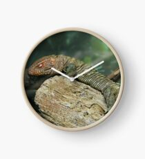 Caiman Lizard Clock