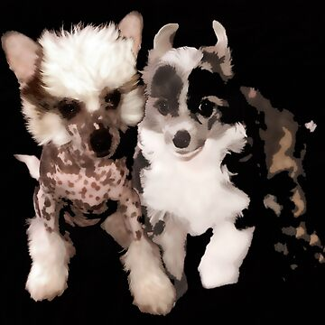 Chinese Crested Baby's by Batiste