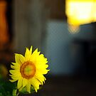 Sunflower Lined by JustSaul