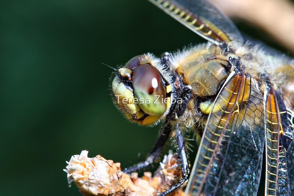 Dragonfly Eye by Teresa Zieba
