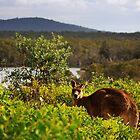 Australian Landscape by myraj