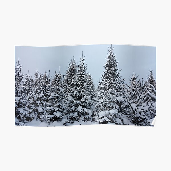 Snow-Covered Trees Poster