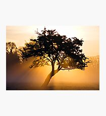 Burning Tree Photographic Print