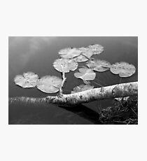 2018_10 Photographic Print