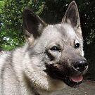 My Gentle Girl (Norwegian Elkhound) by CreativeEm