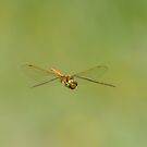 Dragonfly by GD-Images