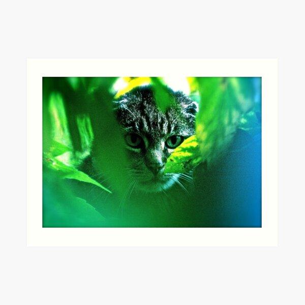 Mein F A V O R I T S! Krieger Katzen Thema Songs. von Brown Sugar. Tribut an die wilde Welt - Cat Stevens. ANSICHTEN 5074. Featured. Mysterien der Vergangenheit und Gegenwart. Wurde verkauft. Kunstdruck
