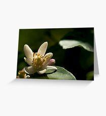 Sour Flower Greeting Card