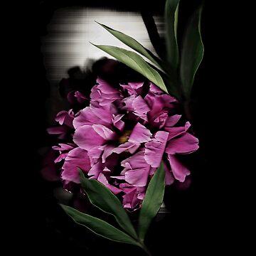 Peony Spotlight II Dark Floral by LindasPhotoArt