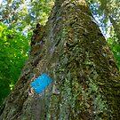 Blue Diamond Tree by DevinVShop