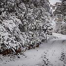 Footprints To Winter Wonderland by georgiegirl55