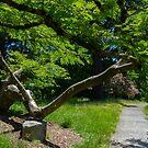 long side tree by DevinVShop