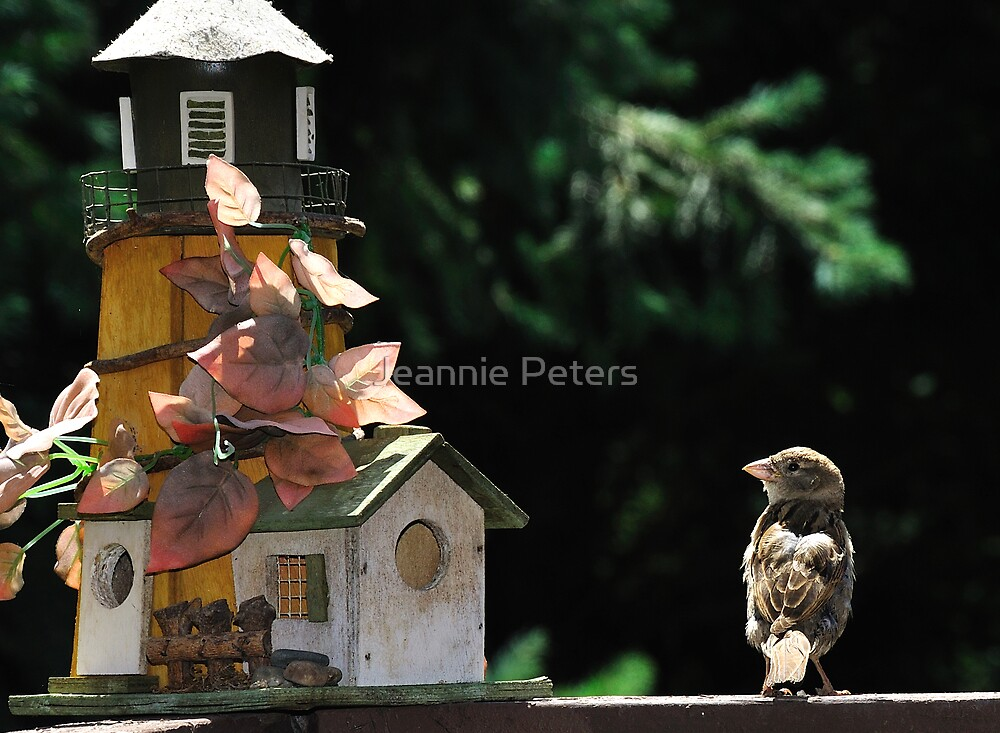 house hunting by Jeannie Peters