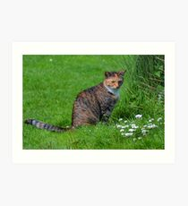 Farm Cat....... Art Print