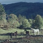 Horses at Fort Augustus on Caledonian Canal Scotland 19840914 0039  by Fred Mitchell
