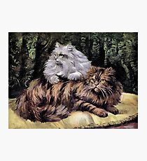 Tabby and Silver Persians Photographic Print