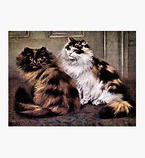Tortoiseshell Persion Cats Art Photographic Print