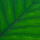 Leaf by KitPhoto