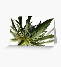 Sharp Green Greeting Card