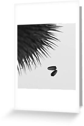 Seeds by KitPhoto