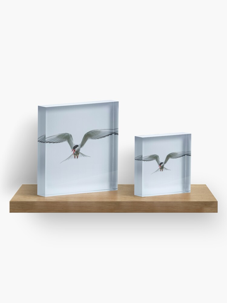 Bloc acrylique ''Stern Arctique': autre vue
