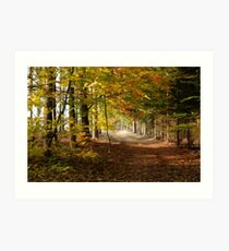 Path through autumn forest Art Print