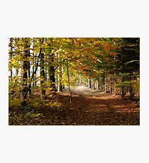 Path through autumn forest Photographic Print