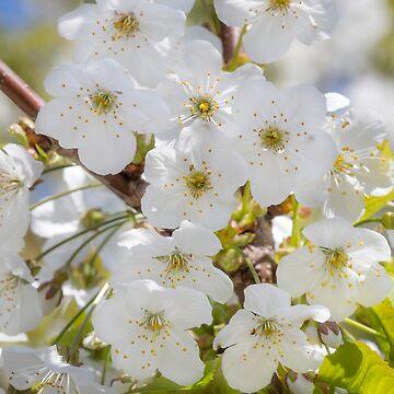 Tiny White Flowers by Femaleform