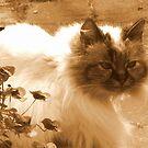 Nina in Sepia by ienemien