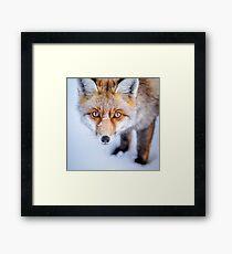 Neugieriger Fuchs Gerahmtes Wandbild