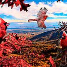 A Cardinal Moment by Miles Moody