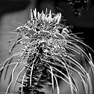 Awesome Flower in B&W by TJ Baccari Photography