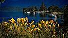 te Anau grasses by Yukondick