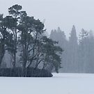 Cold Scape by KitPhoto