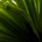 Green 2 by KitPhoto