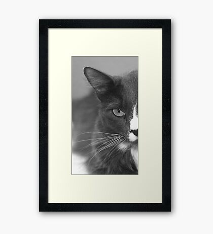 Kitty-Kat Framed Print