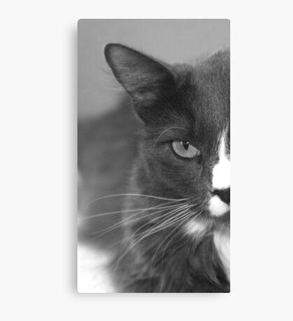 Kitty-Kat Canvas Print