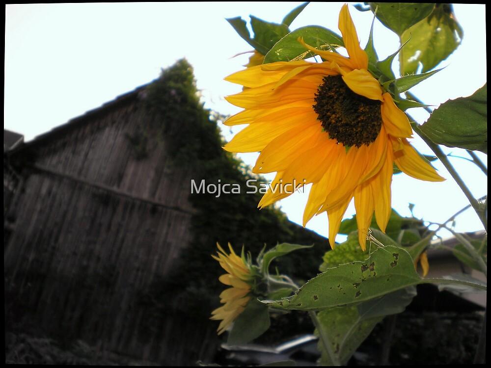 Summer by Mojca Savicki
